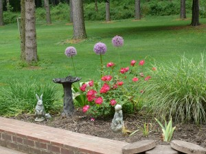Alliums and roses in flowerbed at Riverwood