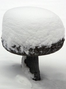 Birdbath covered with snow