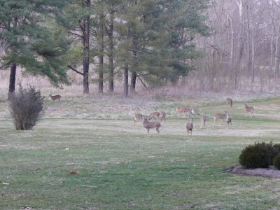 A herd of deer