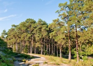 Photo of pine tree woods by Paul Paladin