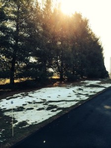 Snow in shadows of pine trees