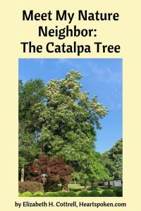 Connect with Nature: The Catalpa Tree