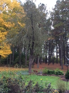 View From The Bench: Mid-October