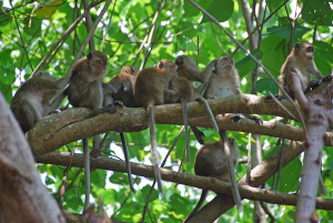 monkeys on a branch