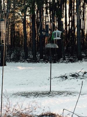 Bird feeders waiting for the birds