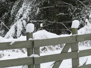 Snow on fenceposts and gate