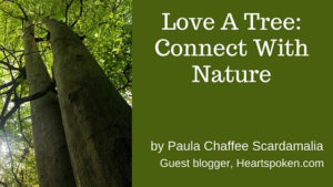 Birch trees and post title and author