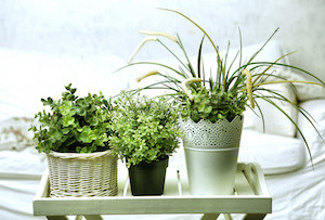 houseplants to make you happier and healthier