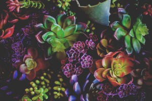 colorful plants to make you happier and healthier