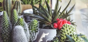 plants in a window to make you happier and healthier