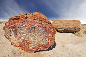Beautiful Petrified Tree, Fossilized Trunks from the Triassic Period - Petrified Forest National Park, Arizona, USA