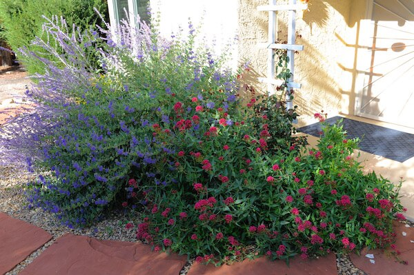 Flowers in Santa Fe