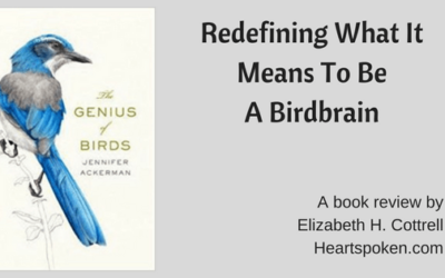 Redefining What It Means To Be A Birdbrain