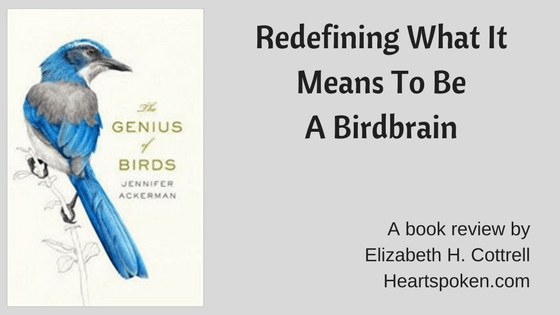 Book Review: <i>The Genius of Birds</i> by Jennifer Ackerman