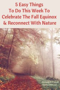 woods during fall equinox, connect with nature