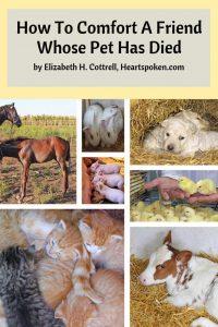 Comfort for pet loss Pinterest