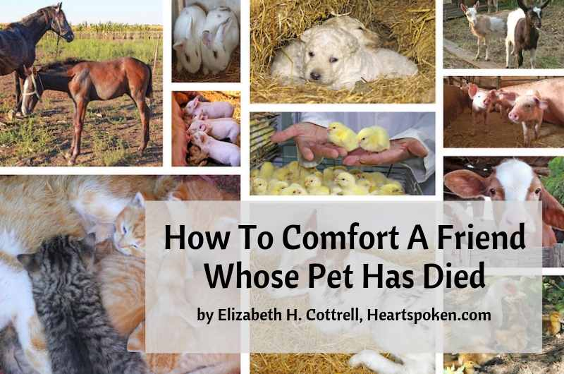 Comfort for pet loss title post graphic