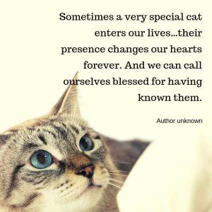 Special cat quote