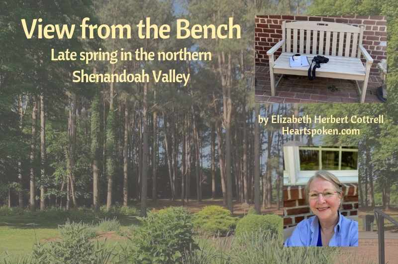 View from the bench: late spring