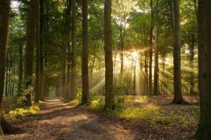 Get outdoors and discover the forest