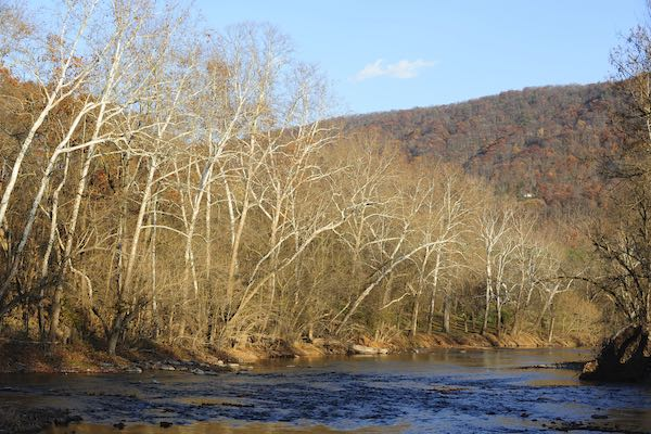Sycamores on the North Fork of the Shenandoah River